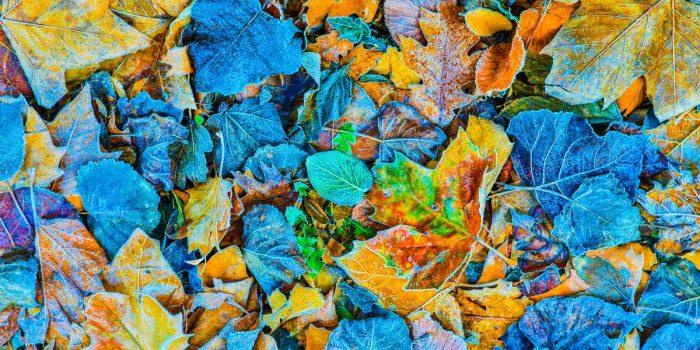 Kunstbild Herbst auf Acryl und Leinwand. Moderne Pop-Art Kunstbilder