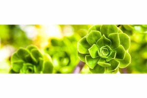 Megapixel Art Edition | Flowers Part 2 limited Kunst Edition