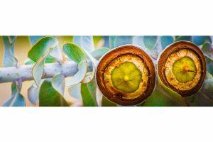 Megapixel Art Edition | Flowers Part 3 limited Kunst Edition