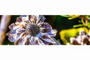 Megapixel Art Edition | Flowers Part 1 limited Kunst Edition